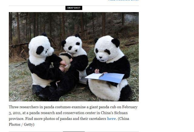 panda participant observation