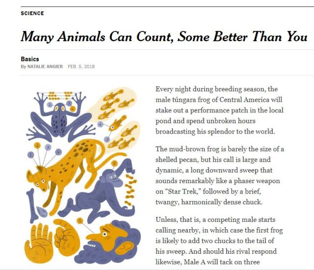 many animals can count